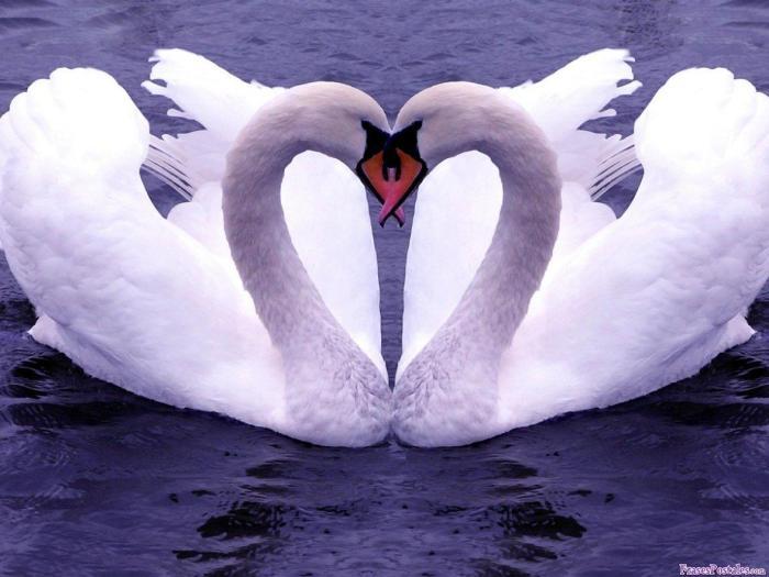 un-amor-eterno